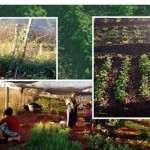 Prefeitura de São João das Missões e Secretaria Municipal de Agricultura em parceria com a Emater-mg, implanta Horta Comunitária