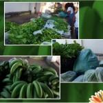 Prefeitura de São João das Missões realiza distribuição de alimentos a famílias carentes do município